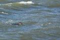 Robben beim Brouwersdam