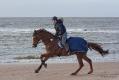 im vollen Galopp am Strand von Renesse/NL