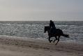 im vollen Galopp in den Sonnenuntergang am Strand von Renesse/NL